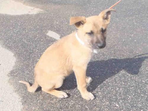 BITSY is an adoptable German Shepherd Dog Dog in Macon, GA  ...Read more about me on @Petfinder.com.com
