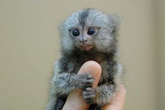 He's the cutest little monkey