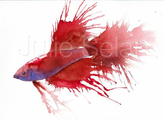 Watercolor Betta Fish 1185887-75093_406166246132389_ ...