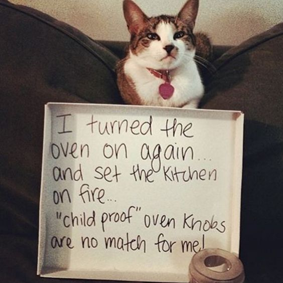 """""""I turned the oven on again and set the kitchen on fire...'child proof' oven knobs are no match for me!"""""""