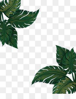 Leaves Png Leaves Transparent Clipart Free Download Flower Watercolor Painting Floral Design Printin Dibujos Botanicos Ilustracion Acuarela Fondos Acuarela