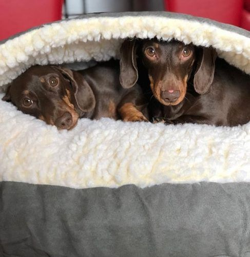 Dachshund Accessories For Dogs Dachshund Bed Dachshund Accessories Dog Bed