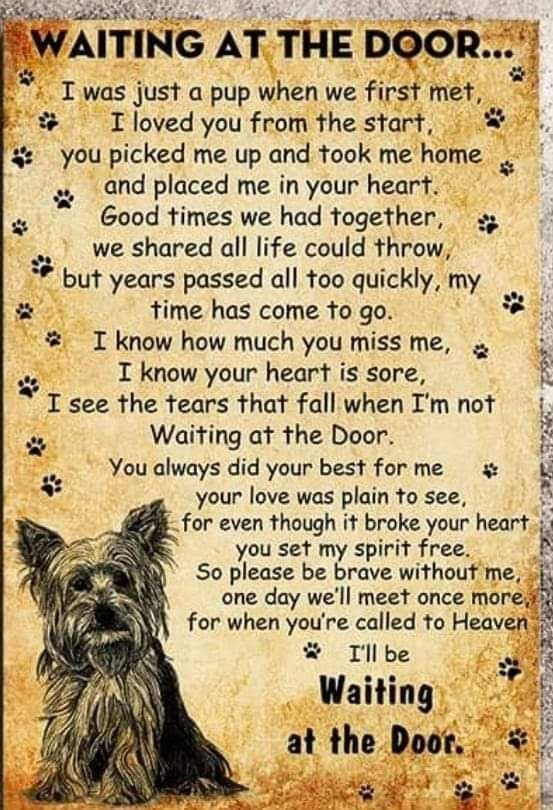 Pin By Georgia Gilchrist On Pets In 2021 Dog Poems Dog Quotes Yorkie Dogs In 2021 Dog Poems Dog Quotes Dog Sympathy