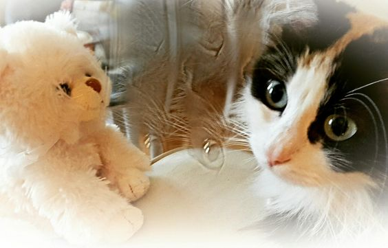 My cat Chanel and my sweet Guccio 😍