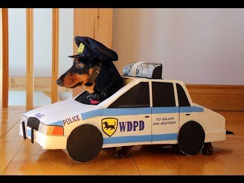 Cops & Robbers - Crusoe the Celebrity Dachshund