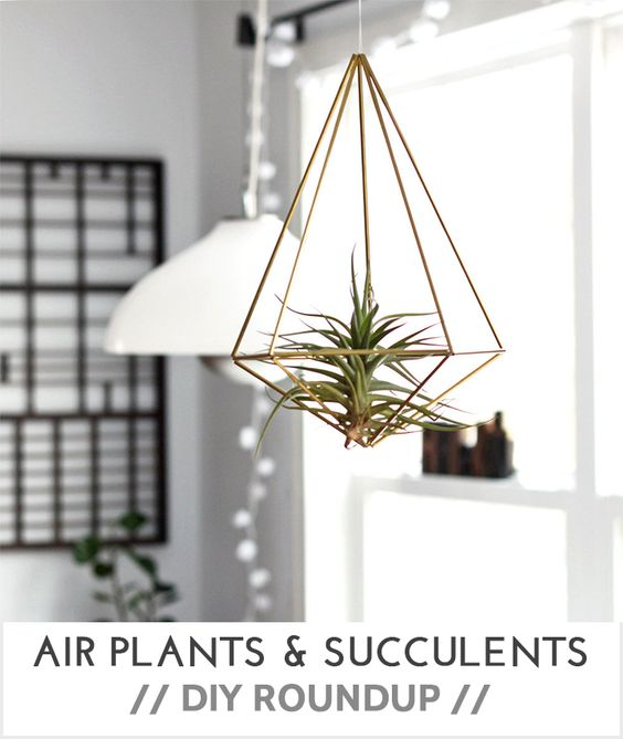 DIY Air Plants, Plants and Succulents