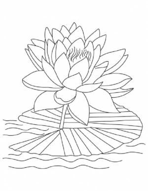 Lotus Flower Lotus Flower Reopen And Bloom Coloring Page By Bethany Lotus Flower Colors Flower Drawing Printable Flower Coloring Pages