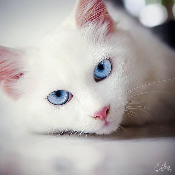 Stunning eyes!! Pretty kitty.