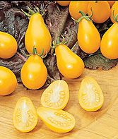 These Yellow Pear Tomatoes are a must!  They add nice color and taste to your salads and salsas.