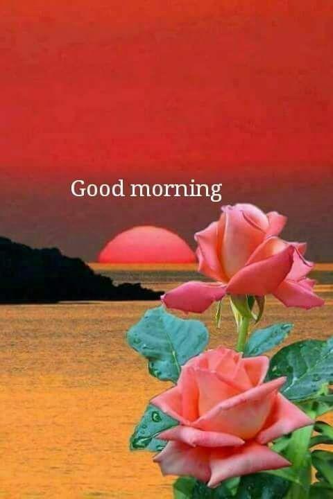 Pin By Gopesh Avasthi On Good Morning 1 Beautiful Rose Flowers Beautiful Roses Beautiful Flowers