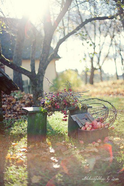 autumn: