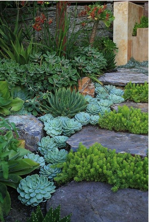 OH MY Heavens!  I love succulents!  Perfect for rock stairs and walls in back yard!  GET ON THIS!  (Better Home Gardens: Do It Yourself: An Attractive Rock Garden Anyone Would Be Proud Of)