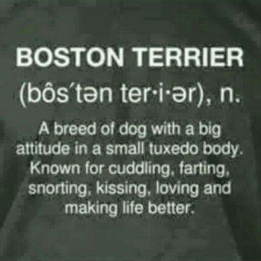 My girl, boston terrier quote