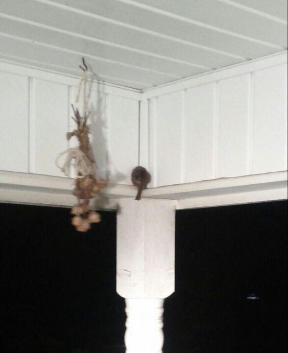 awww on our front porch sleeping carolina wren adi nag sleeping porch