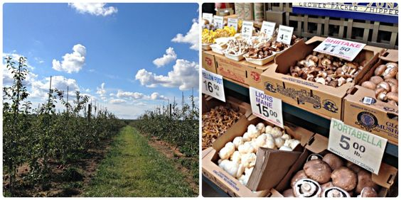 Eat Local: Eat Better - Resources for finding local grown foods