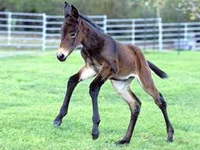 Jolie petite mule, Pau,Pyrénées, France, Europe #animals #nature #cute #love #amazing