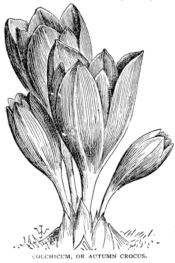 Digital Two For Tuesday Crocus