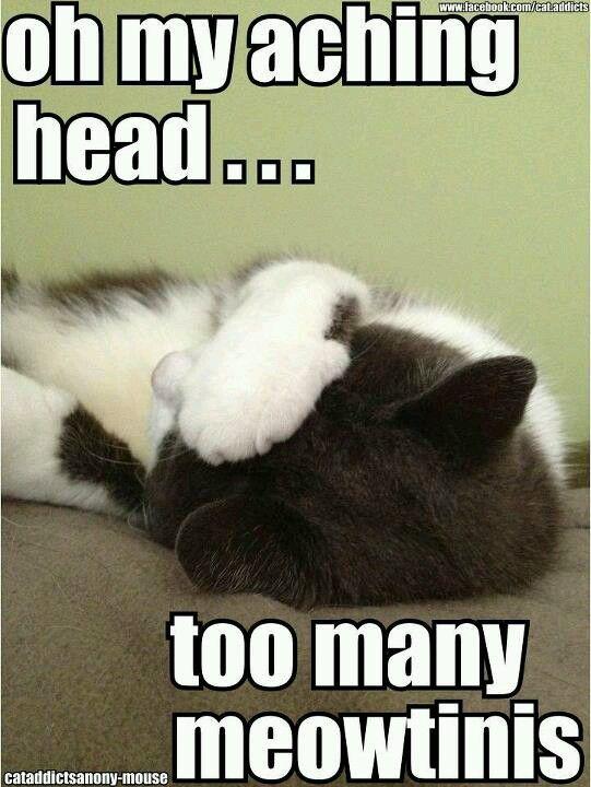 Meow (: