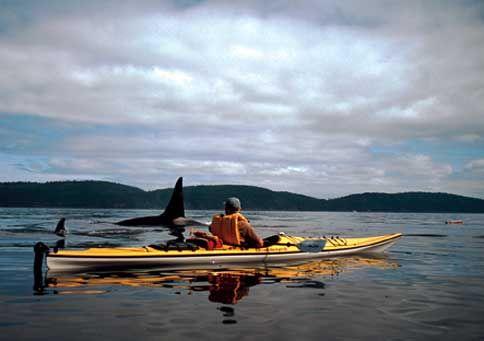 Paddling off the coast of British Columbia's Great Bear Rainforest.  #JetsetterCurator