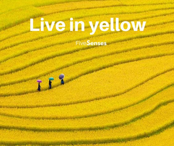 Live in yellow, live in FiveSenses