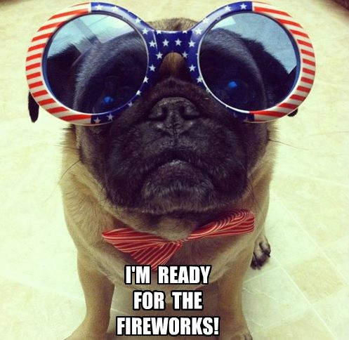 Fourth of July Pug is ready!: