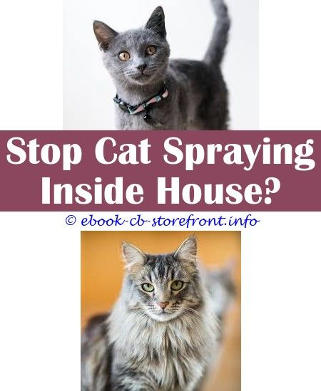 15 Impressive How To Stop My Cat Spraying Inside The House Bebe