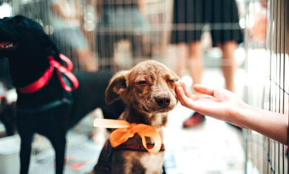 Often People Think The Humane Society Of The United States Is Connected To Their Local Humane Society In Themunity In 2020 Humane Society Animal Shelter Animal Rescue