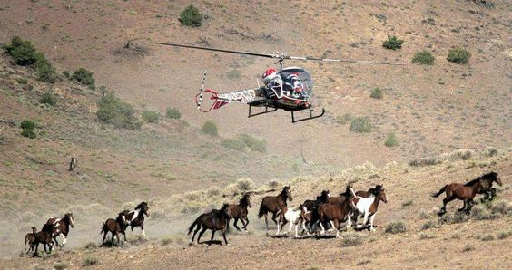 Nevada asks for public's help to adopt horses gathered near Reno