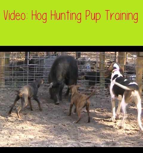 Dog Training Tips Dogtrainingtips Dog Training Tips Hog Dog