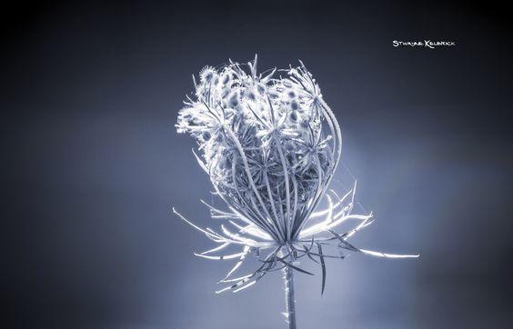 Frozen Wildflower