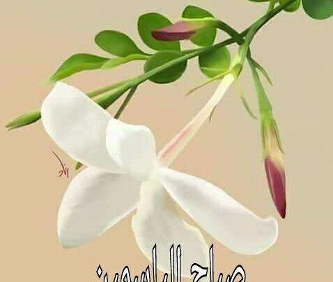صور صباح الياسمين صباح الفل والياسمين Good Morning Arabic Islamic Images Flowers