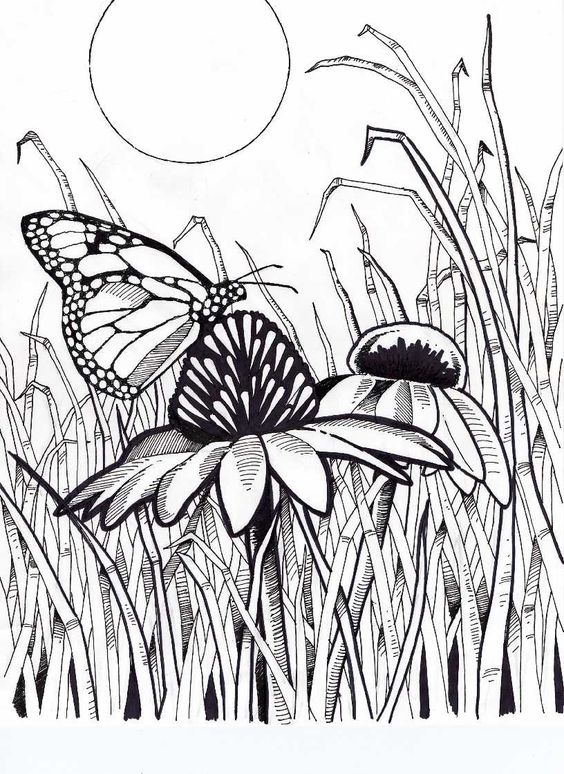hard butterfly coloring pages - photo#29