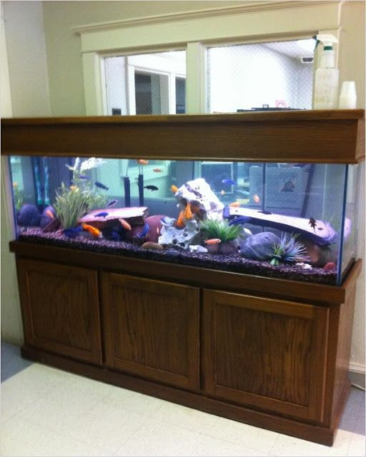 150 Gallon Fish Tank In 2020 150 Gallon Fish Tank Fish Tank Fish Tank Decorations