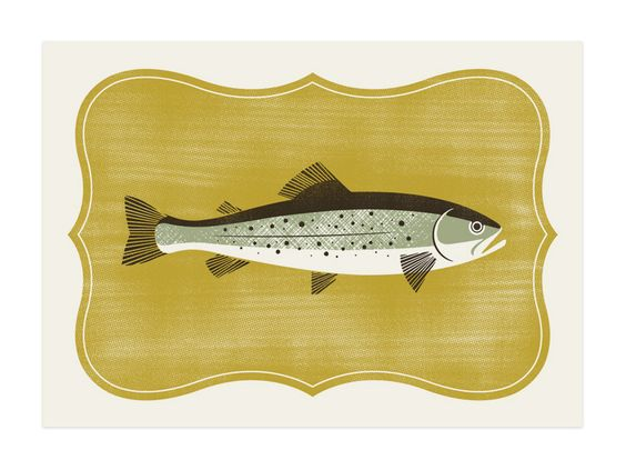 fish illustration by brad surcey