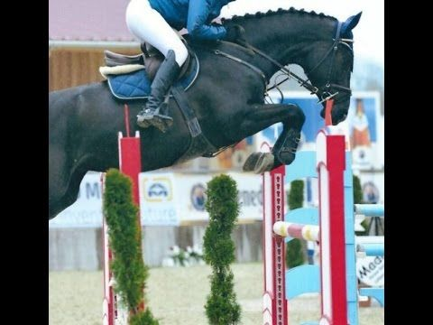 www.sporthorses-online.com 2009 top OLD  jumping mare 140 cm level 16.2 hh