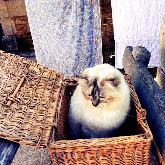 Flanelle, basket case
