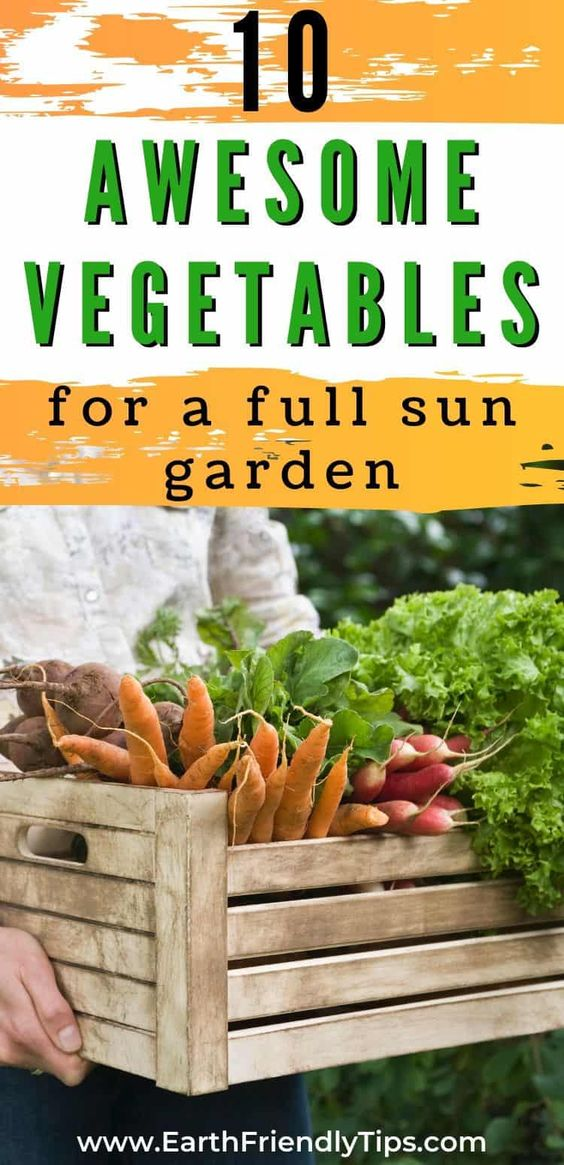 If you have a spot in your garden that gets plenty of sunlight, you'll have great success growing some of these best full sun vegetables. These top full sun vegetables need a lot of sun and heat to do their best, so be sure to stick them in a sunny spot. #ecofriendly #garden #gardening #sustainable