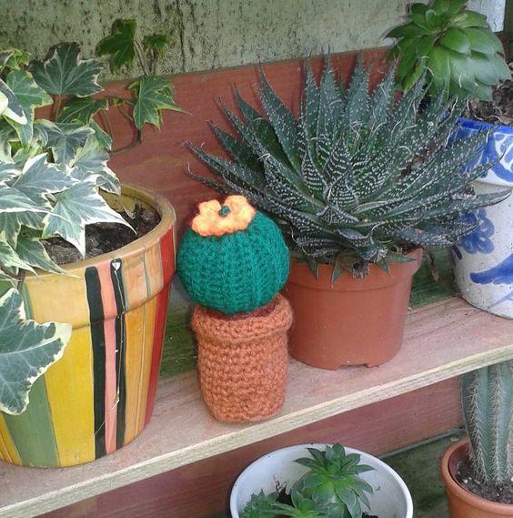 Cactus crochet et succulents dans le jardin à palais belle ile by colette.poupoune