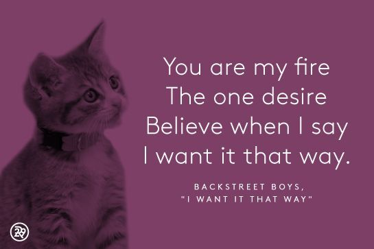 The Purrfect Valentines, Courtesy Of Kittens & Boy Bands #refinery29  http://www.refinery29.com/cute-valentines-day-kitten-pictures#slide-1  Tell me why, though.Accompaniment....
