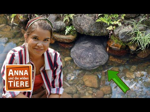 Der Glitschige Riesensalamander Doku Reportage Fur Kinder Anna Und Die Wilden Tiere Youtube In 2020 Wilde Tiere Riesensalamander Tiere