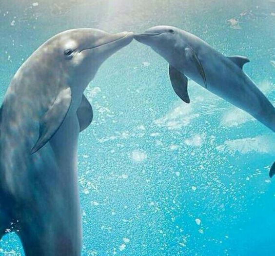 Dolphins mama & baby (Weheartit)