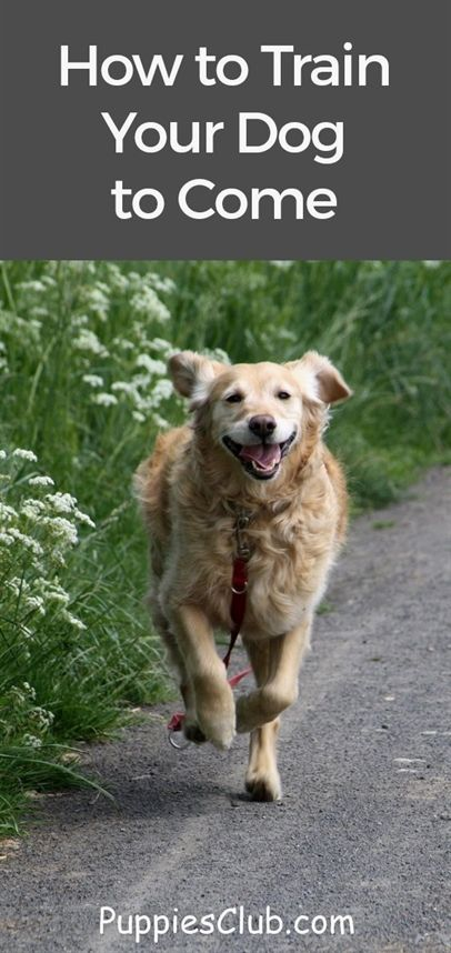 Dog Training Come Dog Training Manual Book K9 1 Dog Training