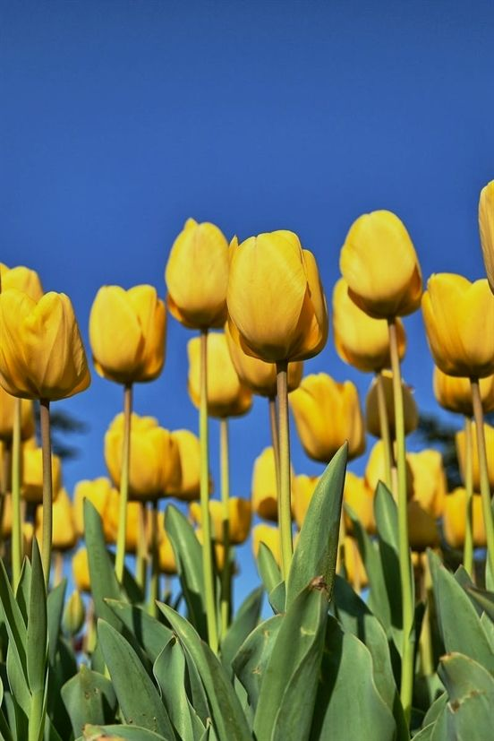 Advice That Will Prove Helpul When Horticulture Garden Express Gardening Kneeling Pad Gardening Books