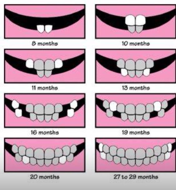Baby Teeth Growth Chart in a way that makes sense | Baby ...