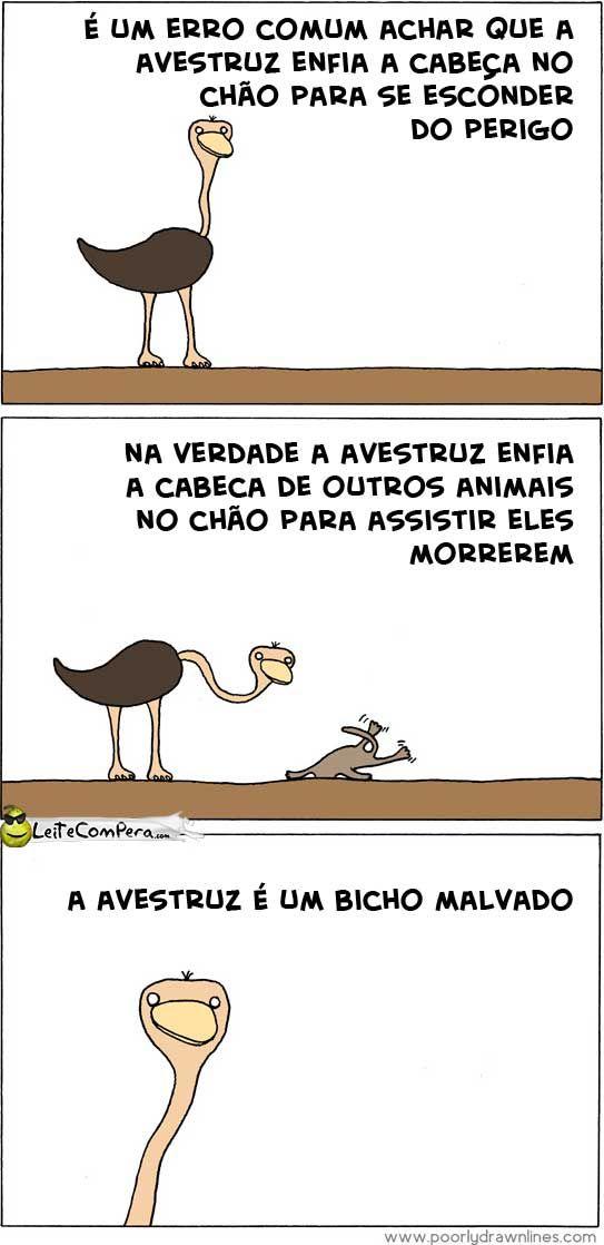 A avestruz é um bicho malvado