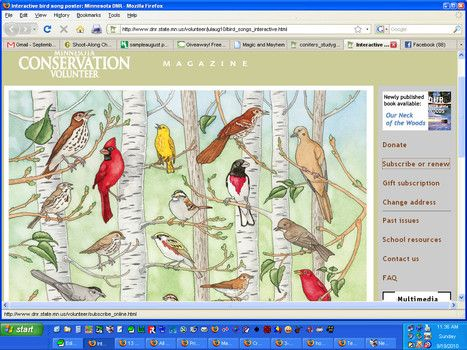 Fabulous interactive page teaches bird songs
