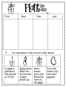 plant life cycle freebie worksheets pinterest plants teacher pay teachers and life cycles. Black Bedroom Furniture Sets. Home Design Ideas