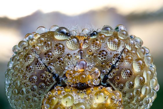 FOCUS STACKING - Alfred Blaess Photography