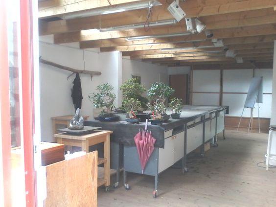 Raum zur Baumpflege  [Bonsai]