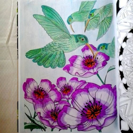 Colorido por minha mãe. #avesdoparaiso #artecomoterapia #livrosdecolorir